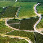 Aerial view by Victor Pugatschew