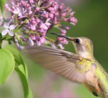 Lilac Hummingbird Sticker