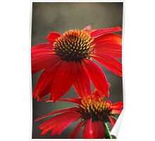Red Coneflower Poster
