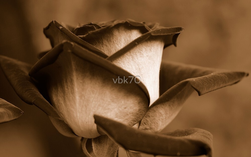 Remembrance III by vbk70
