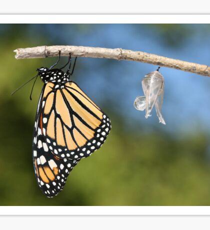 Monarch Butterfly & Chrysalis Sticker