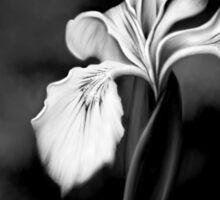Wild Iris - Black & White Photo Painting Sticker