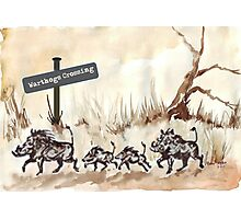 Warthogs Crossing Photographic Print