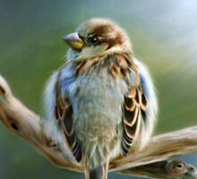English-House Sparrow Sticker