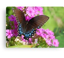 Eastern Tiger Swallowtail Metal Print