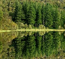 September Reflections by Jamie  Green