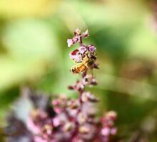 Bumblebee Bokeh by RoomWithAMoose