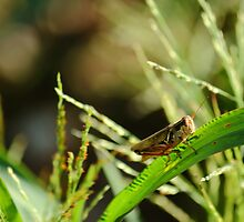 Grasshopper! by RoomWithAMoose
