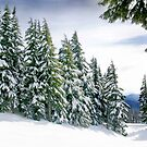 Oregon Winter by KarDanCreations