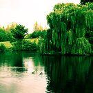 Markeaton Park 2 by Simon Bowker