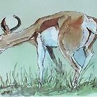 Springbuck in the Game Reserve by Maree Clarkson