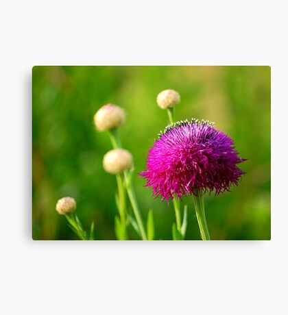 Basket Flower Canvas Print