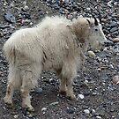 Getting My Goat! by Jann Ashworth