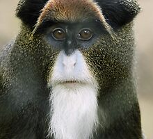 Pretty Monkey