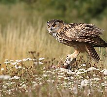 Regal Eagle Owl by Graham Jones