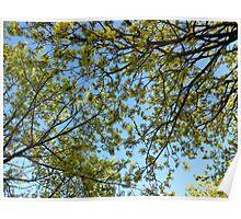 sky leaves Poster