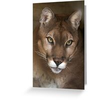 Portrait of a Cougar Greeting Card