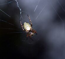 One of those really cool orb spiders that you find in any garden by Hugh Coleman