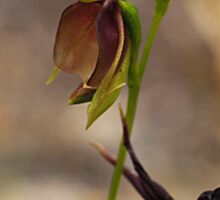 Flying Duck Orchid Duo - Morwell NP Sticker