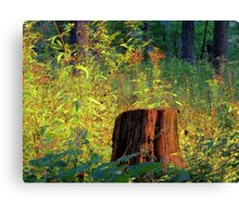 The Shining Stump Canvas Print