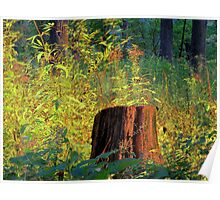 The Shining Stump Poster