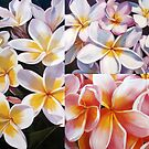 Frangipani Collage by Jan Lawnikanis
