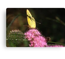 """""""Hey Dude"""" any more pollen up there? Canvas Print"""