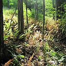 Ferns in the Forest by teresa731