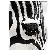 Zebra Eye Poster