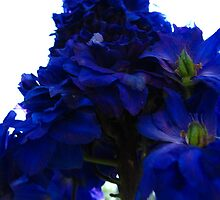 Indigo Delphiniums Illuminated by MarianBendeth