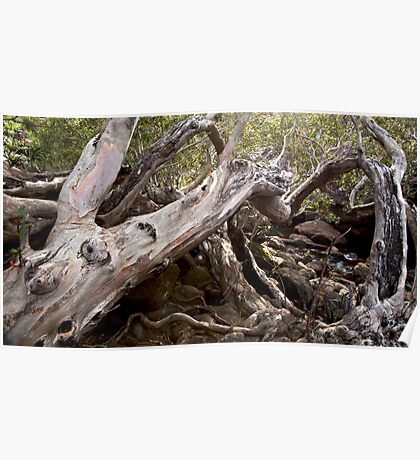 Tree Wreck  Poster