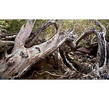 Tree Wreck  Photographic Print