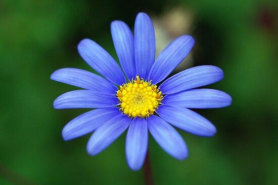 Blue by Adam Le Good