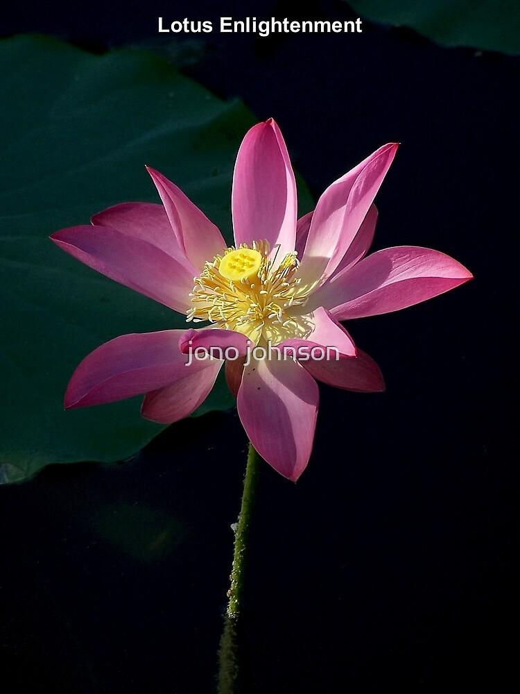 Lotus Enlightenment  by jono johnson