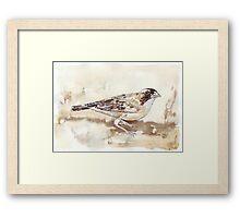 White-browed Sparrow Weaver (Koringvoël) Framed Print