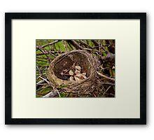 Abandoned Nest Framed Print