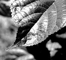 Leaf Contrast by James2001
