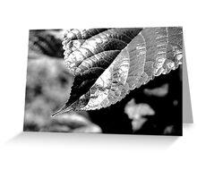 Leaf Contrast Greeting Card