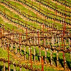Rolling Vineyard by Escott O. Norton