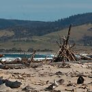 Driftwood Beach by UncaDeej