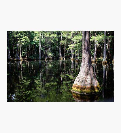 Florida Beauty 4 Photographic Print