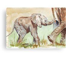 Baby Elephant walk Canvas Print