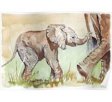 Baby Elephant walk Poster