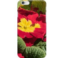 Red flowers yellow centres polyanthus or primulas Leith Park Victoria 20150924 0404   iPhone Case/Skin