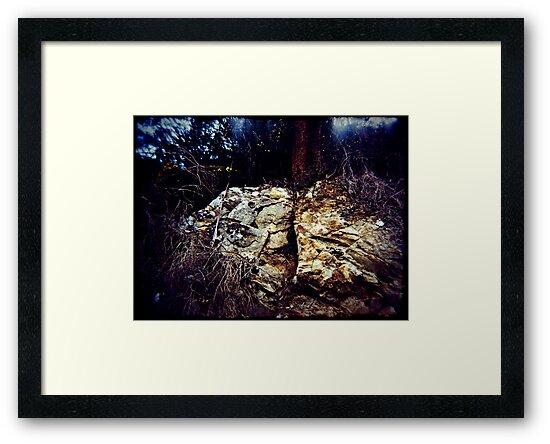 Splitrock by Jodi Fleming