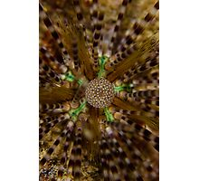 Urchin Photographic Print
