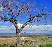 Tree in a Landscape by Harry Oldmeadow