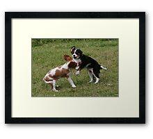 Puppies At Play Framed Print