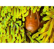 Anemone Fish Photographic Print