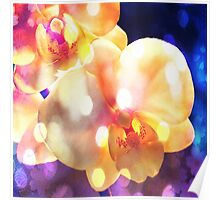 Lit Up Orchids Poster